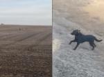 Video: Rodine v noci ušiel pes. Na druhý deň ho našli, no mal neobvyklú spoločnosť
