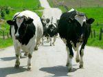 Poľský minister poľnohospodárstva tvrdí, že podozrivé mäso nebolo nevyhovujúce