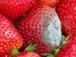 Je bezpečné jesť potraviny, z ktorých odstránime plesnivú časť?