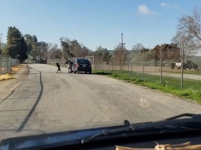 Video: Smutný psík sa snaží prebiť do auta majiteľa, ktorý ho vysadil uprostred cesty