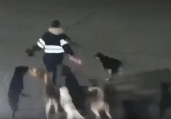Video: Ženu naháňala svorka psov. Ich útok neprežila