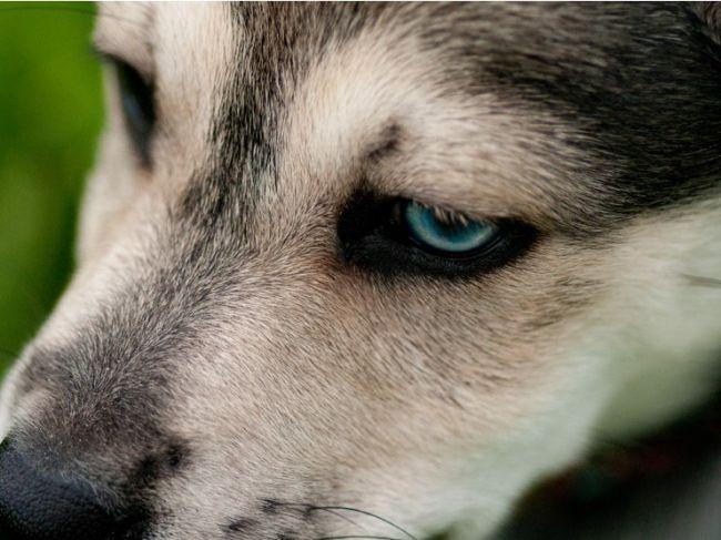 Opitý Slovák v Rakúsku zneužíval šteňa na žobranie, polícia mu ho odobrala