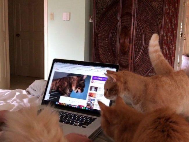 Video: Mačky sa začali zvláštne správať, keď im pustili virálne video