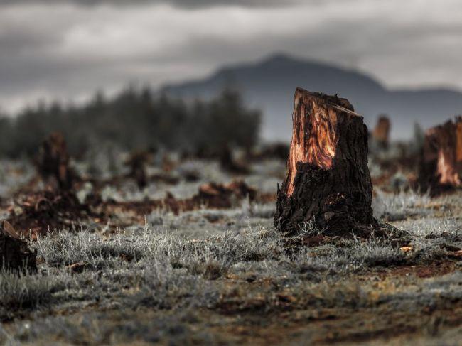 12 znakov, ktoré svedčia o tom, že sa nachádzame uprostred šiesteho masového vyhynutia