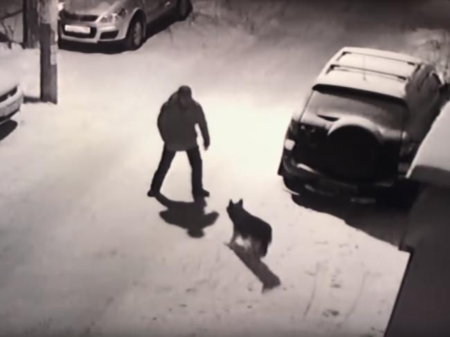 Video: Muž si kopol do psa. Karma ho zasiahla okamžite