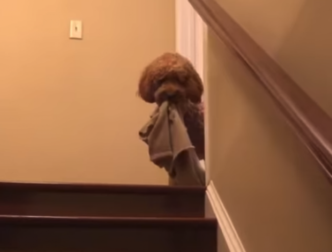 Video: Tento pes má roztomilý rituál pred spaním. Sledujte, čo každú noc robí