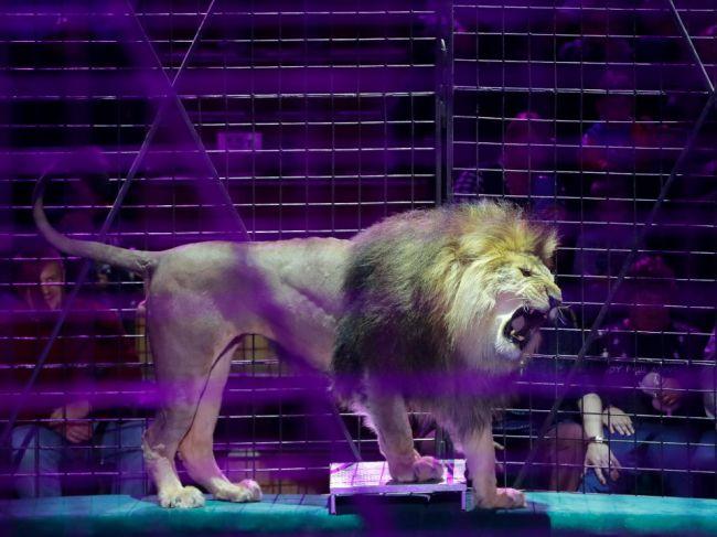 Na Slovensku v cirkusoch nebudú môcť vystupovať takmer žiadne zvieratá