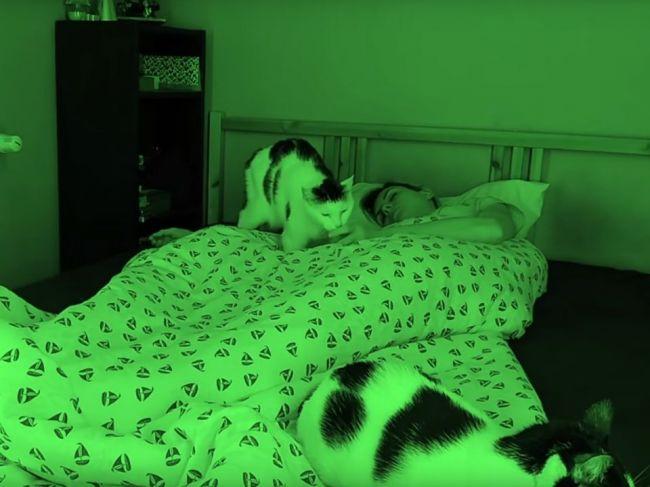 Video: Čo robia mačky počas toho, ako spíte?