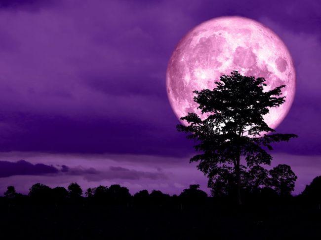 Ružový Mesiac už čoskoro rozžiari oblohu. Kde a kedy pozorovať nebeský fenomén?