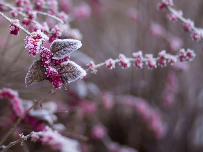 V noci môžu byť na celom Slovensku prízemné mrazy