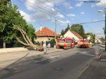 V bratislavskom Ružinove spadol strom na rodinný dom
