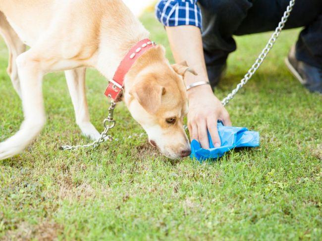 Prečo niektoré psy jedia výkaly?