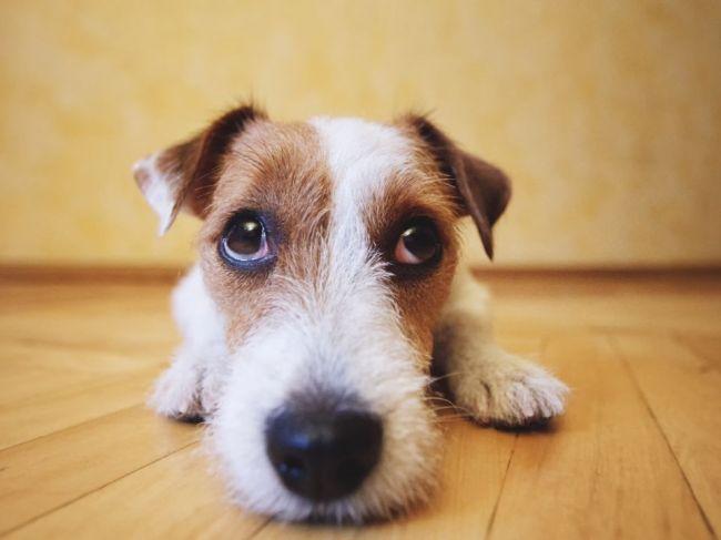 Toto sa deje s vaším psom, keď prežívate stres