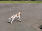 Video: Pes zbadal kačice, potom sa s jeho telom stalo niečo zvláštne
