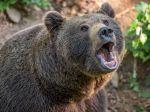 V Slovinsku napadol medveď 80-ročnú ženu