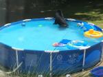 Video: Dieťa chcelo ísť do bazéna. Pri pohľade z okna mu to mama zakázala