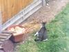 Video: Muž zaštekal na mačku, aby zachránil holuba. Vtom však prišiel nečakaný predátor