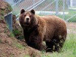 Po slovenskej obci sa dva týždne prechádza medveď, ochranári miesto zatiaľ monitorujú