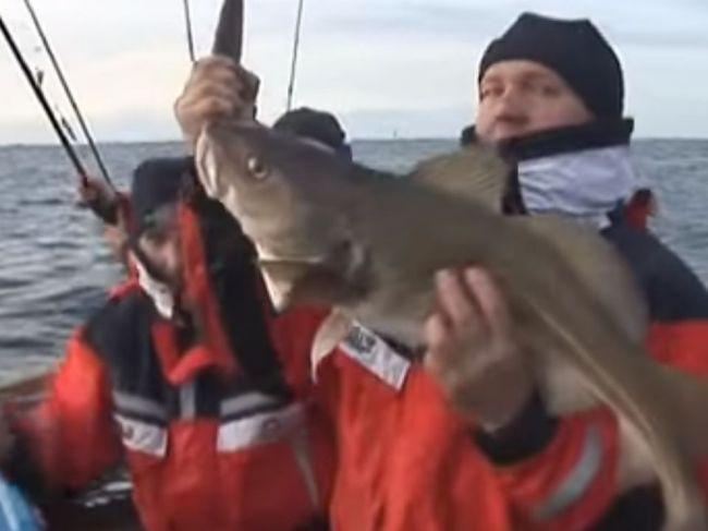 Európska komisia vydala okamžitý zákaz lovu tresky v časti Baltského mora