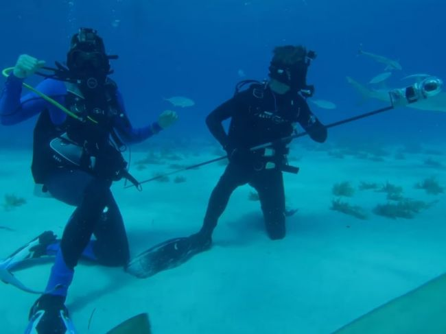 Video: YouTuber podnikol experiment, aby zistil, či žraloky vo vode cítia kvapku krvi