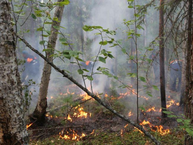 Požiare na Sibíri neutíchajú, horí ich vyše 200
