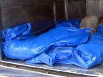 Africký mor sa šíri, veterinári nariadili usmrtiť diviačiu zver vo zverniciach