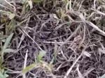 Video: Muž objavil v tráve desivý neznámy druh hmyzu