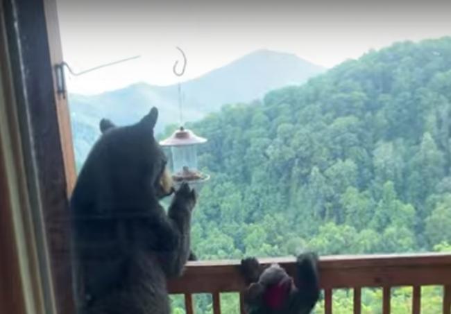 Video: Rodina chcela ísť na balkón. Takúto návštevu na ňom nečakala