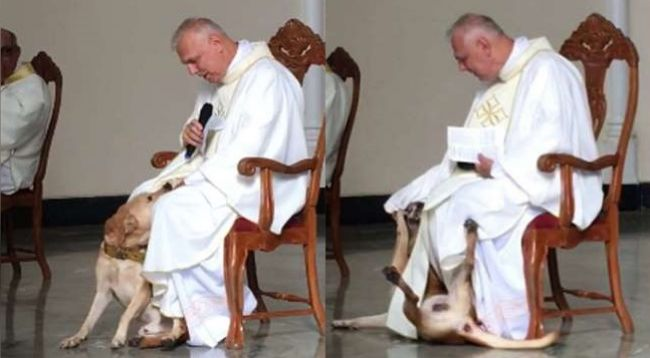 Video: Do kostola zablúdil pes, takto naňho zareagoval kňaz