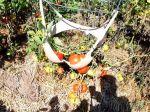 Video: Manžela prekvapil úsmevný záhradkársky trik jeho polovičky