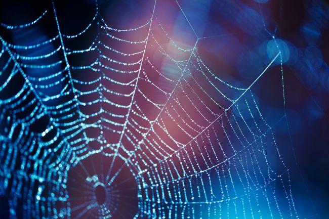 Aké bolo leto, také množstvo pavúkov bude na jeseň