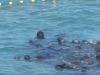 Video: Lovci chceli zabiť delfíny, zvieratá pred chytením urobili niečo zvláštne