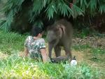 Video: Sloniu sirotu neprijalo stádo slonov. Takto zareagovala, keď uvidela ošetrovateľa