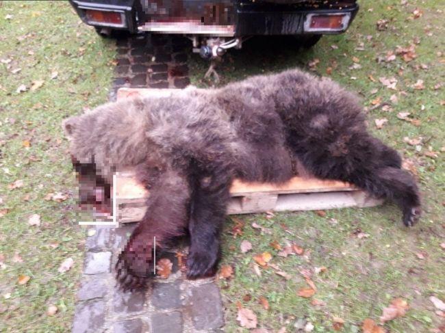 Pri Prievidzi zrazil vodič medveďa, ten neprežil