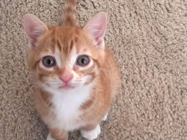 Video: 7 zvukov, ktoré mačky najčastejšie vydávajú, a čo znamenajú