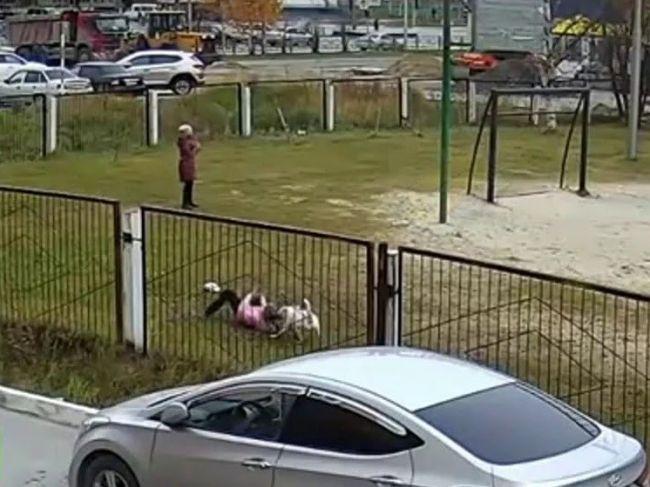 Video: Bulteriér napadol deti na ihrisku