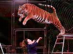 Sloboda zvierat víta zákaz cirkusov s divožijúcimi zvieratami