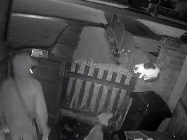 Video: Majiteľ pustil svojho psa na mačku, ten ju roztrhal