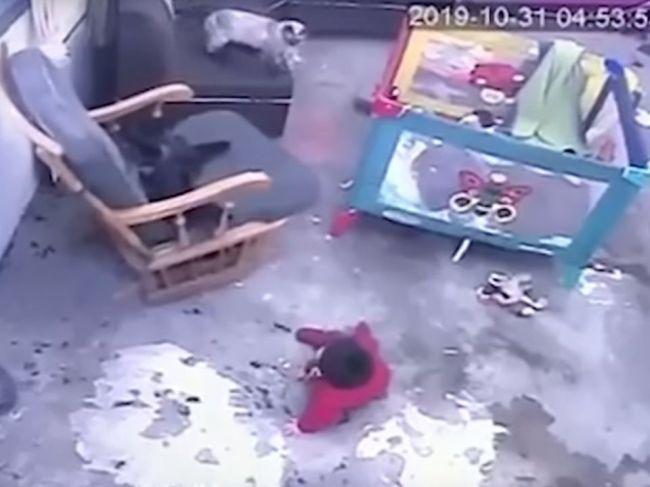 Video: Mačka zachránila dieťa pred smrteľným osudom