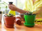 FOTO: 9 izbových rastlín pre úplných začiatočníkov + ako sa o ne starať