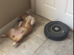 Video: Toto sa stane, keď chce vysávač povysávať pod psom