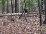 Video: Poľovník v lese zastrelil jeleňa, hneď mu ho však ukradli