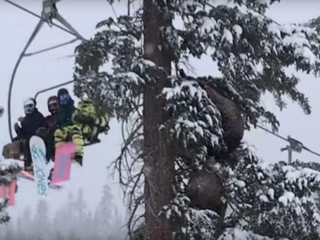 Video: Lyžiarov na vleku vyľakali medvede. Vyliezli na strom na dosah od nich