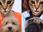 Video: Toto sa stane, keď psovi ukážete mačací filter