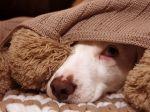 Veterinár radí, ako najlepšie pomôcť domácim zvieratám na Silvestra