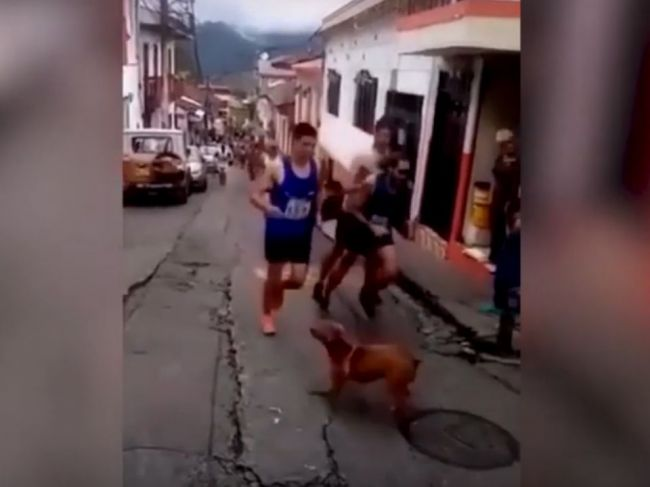 Video: Bežec počas závodu chladnokrvne kopol psa, takto sa mu to vypomstilo