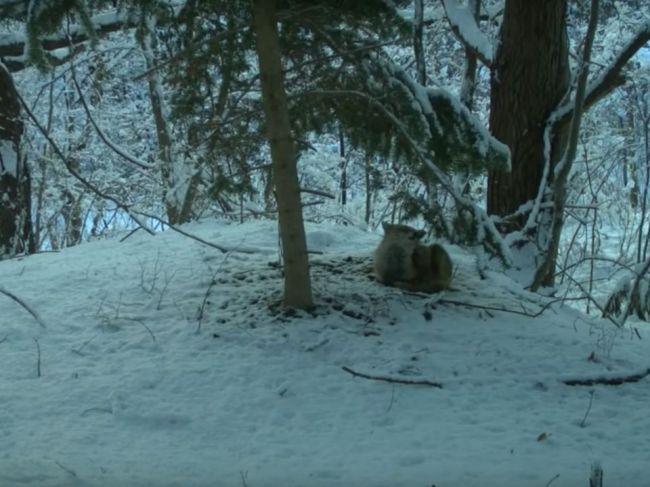 Video: Kamerový záznam z neobývateľnej zóny vo Fukušime udivuje vedcov