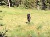 Video: Toto sa stane, keď stretnete v lese vlka