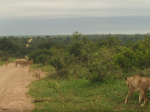Video: Levica stratila svoju svorku. Takto na ňu reagovali levy, keď ju konečne našli