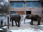V zoo Bojnice potvrdili výskyt vtáčej chrípky